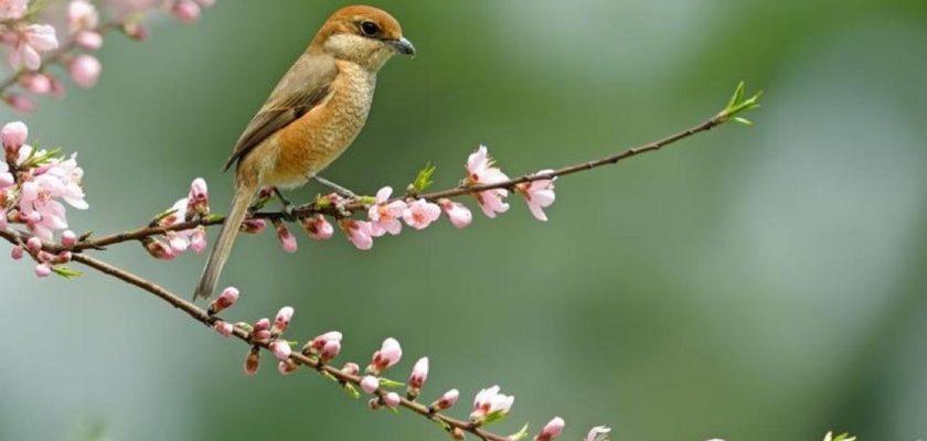 بهار 1400 به امید بهار ظهور
